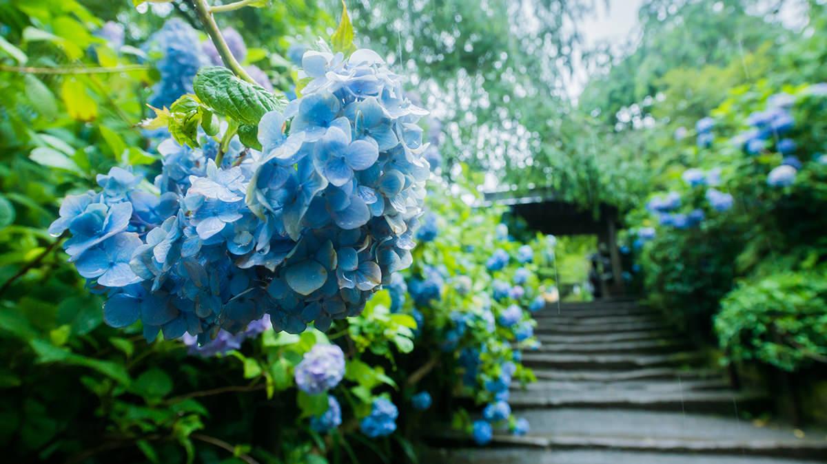 江ノ島・鎌倉の景色を見てマインドフルネスな状態になろう
