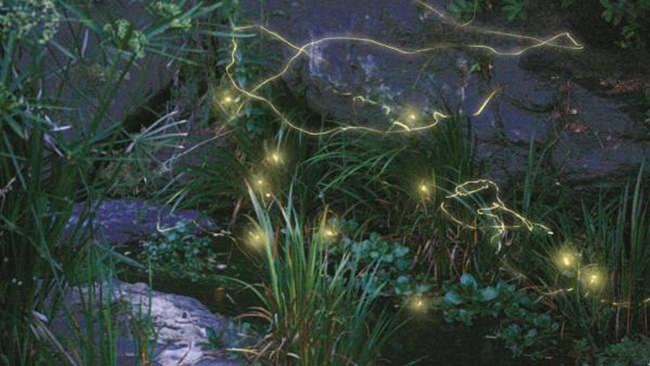 幻想的な蛍の光を無料観賞できるスペシャルデー開催決定!