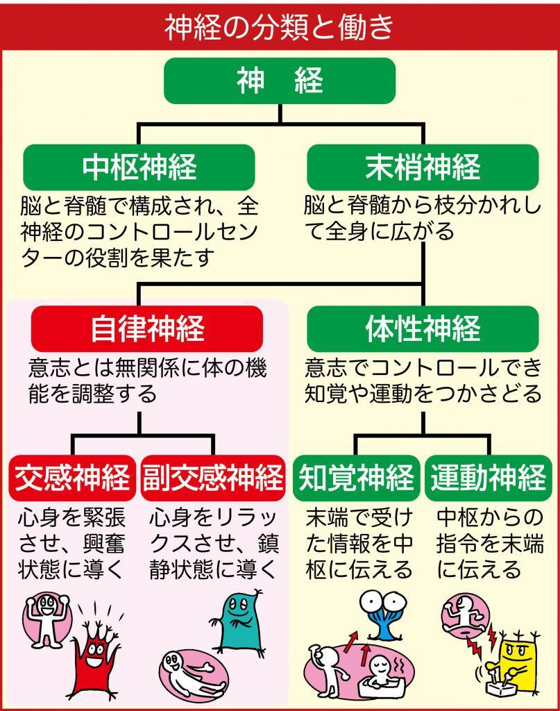 脳神経内科とは?|神経内科の主な病気|日本神経 …