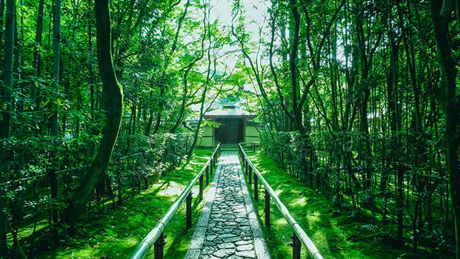 京都の景色を見てマインドフルネスな状態になろう