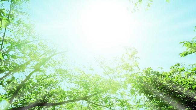 心が落ち着かない朝は顔を上げて木を見よう