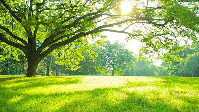 愛知県単身者で休日が増えることが嬉しくない人は3人に1人!!「休日迷子」がやってみたいのは「自然と触れ合うこと」
