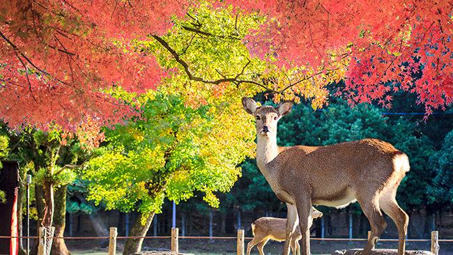 奈良の景色を見てマインドフルネスな状態になろう