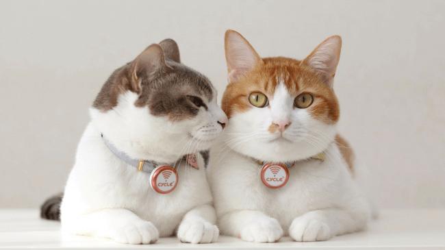 世界初!猫の身体活動と睡眠評価をウエラブル端末で実証。猫の高齢化が進む中、病気予防に期待